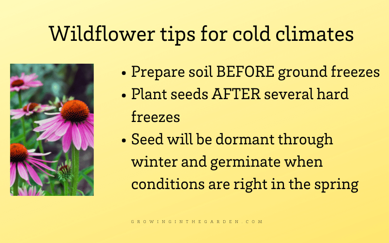 How to grow wildflowers that come back year after year