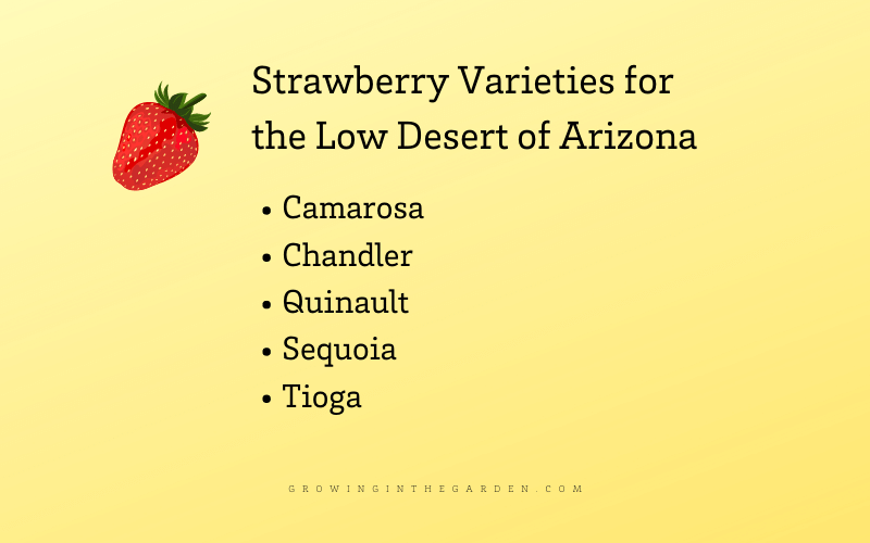 Strawberry varieties for Arizona
