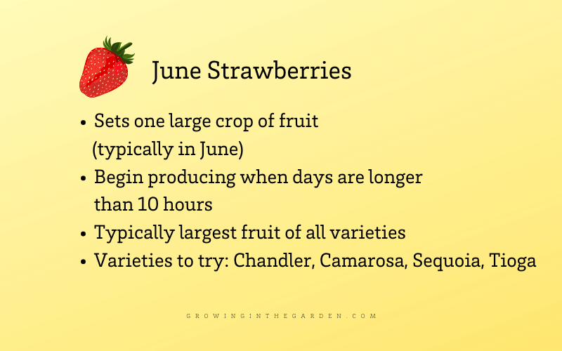 June types of strawberries