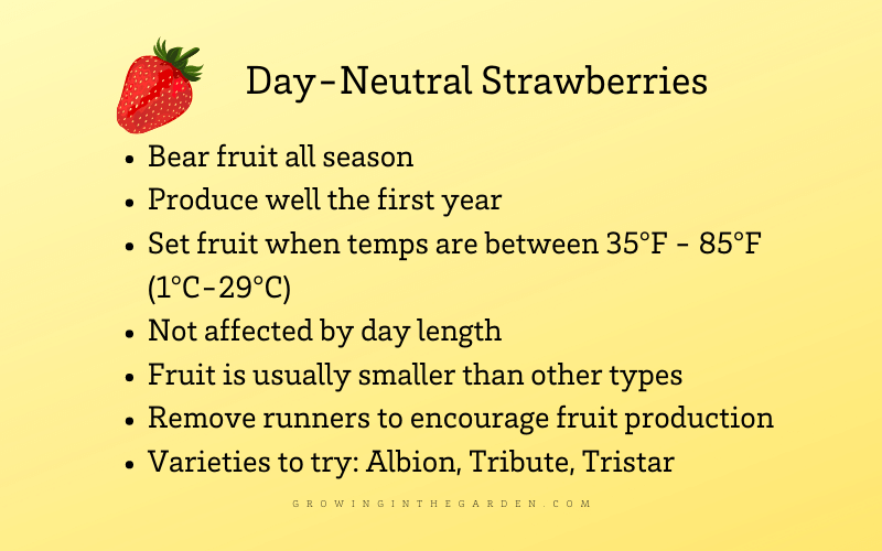 Day neutral strawberries