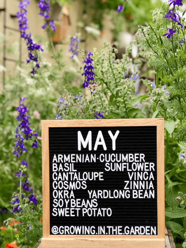 What to plant in the Arizona garden in May