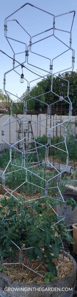 Review of Gardener's vertex lifetime tomato cage #tomatocage #vertextomatocage