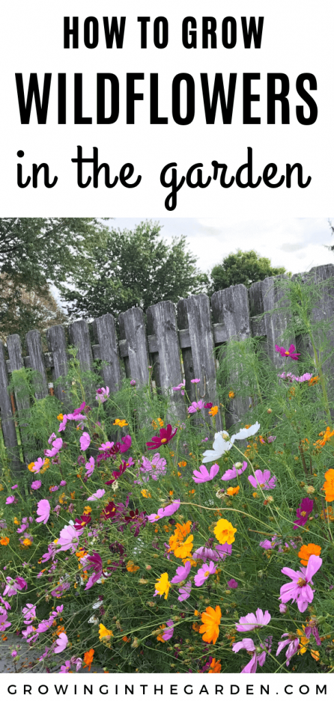 How to grow wildflowers in Arizona #wildflowers #superbloom #arizonawildflowers