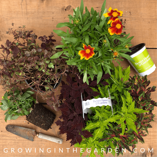 How to Plant Pots - Tips for Container Gardening