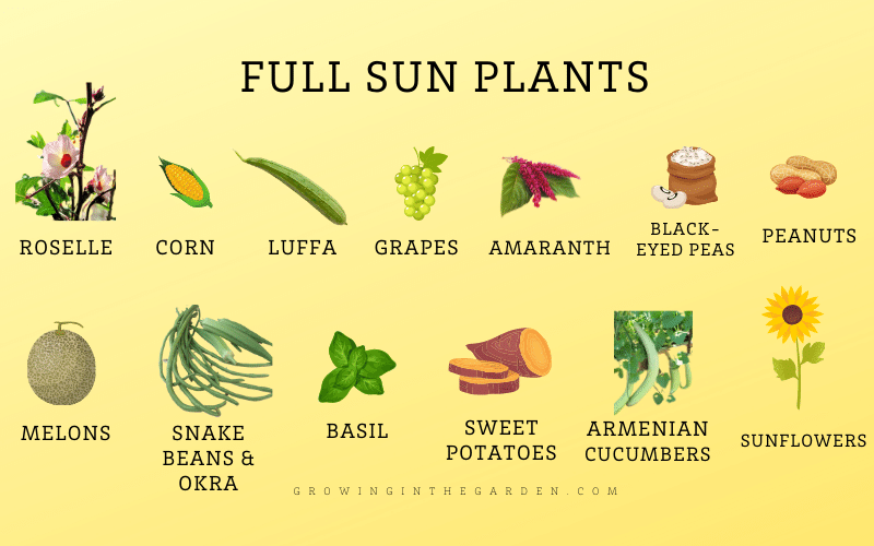 Which plants like full sun in hot climates