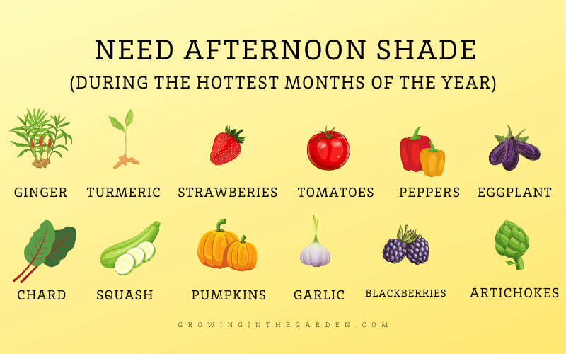 Which plants need shade in hot climates