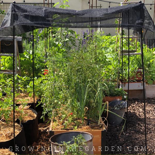 Gardener's supply shade canopy