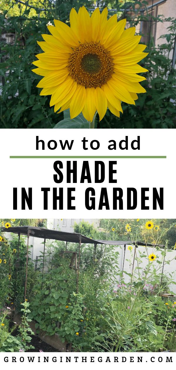 How to create shade in the garden / Add shade to a hot summer garden