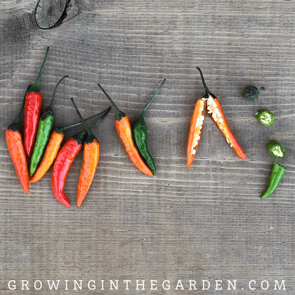 Thai chili pepper Pepper Varieties - Types of Peppers