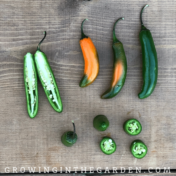 Serrano Pepper - Pepper Varieties, types of peppers