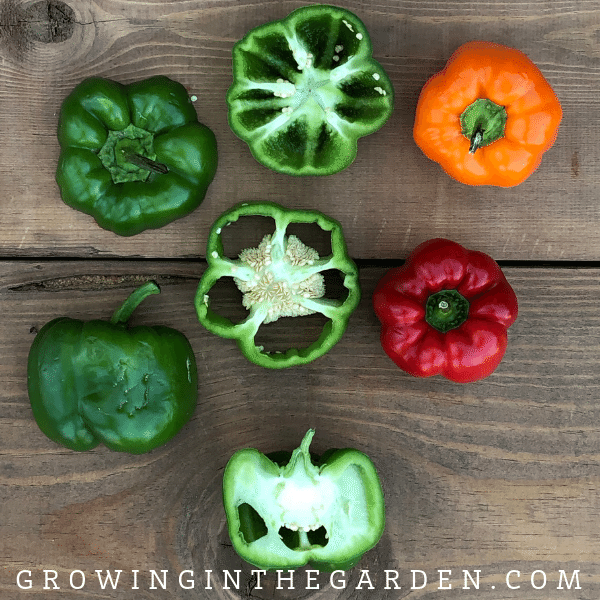 Pepper Varieties - Types of Peppers