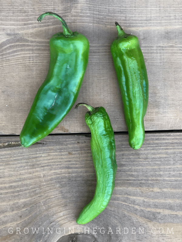 Pepper Varieties - Types of Peppers - Anaheim pepper