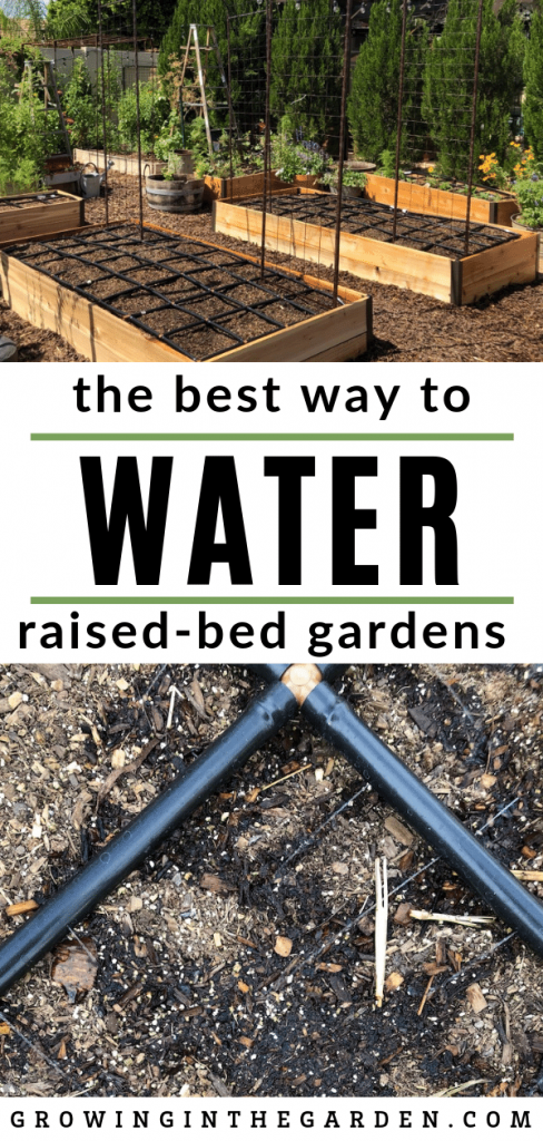The best way to water square foot gardens and raised bed gardens #squarefootgarden #gardening #watering #driplineirrigation