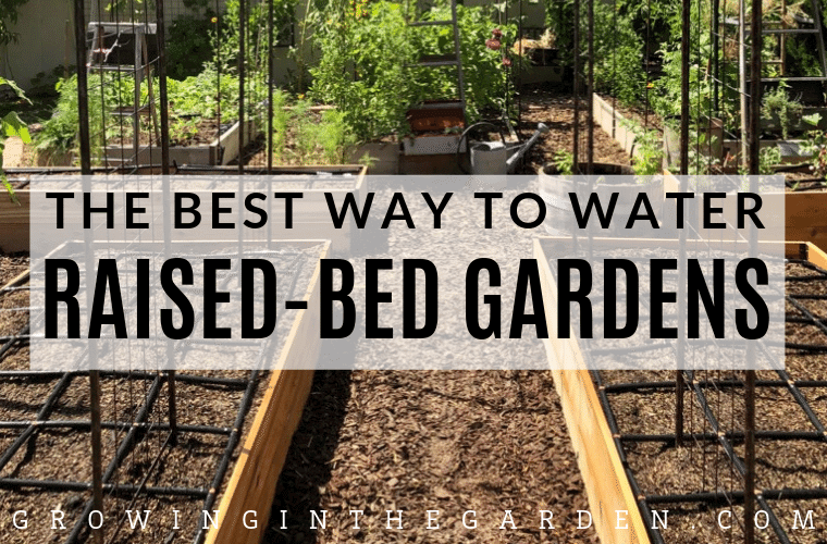 The best way to water raised bed gardens #gardening #watering #driplineirrigation