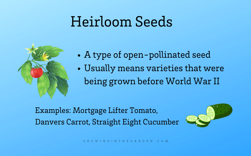 What are heirloom seeds infographic