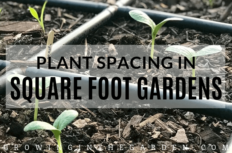Plant Spacing in Square-Foot Gardens