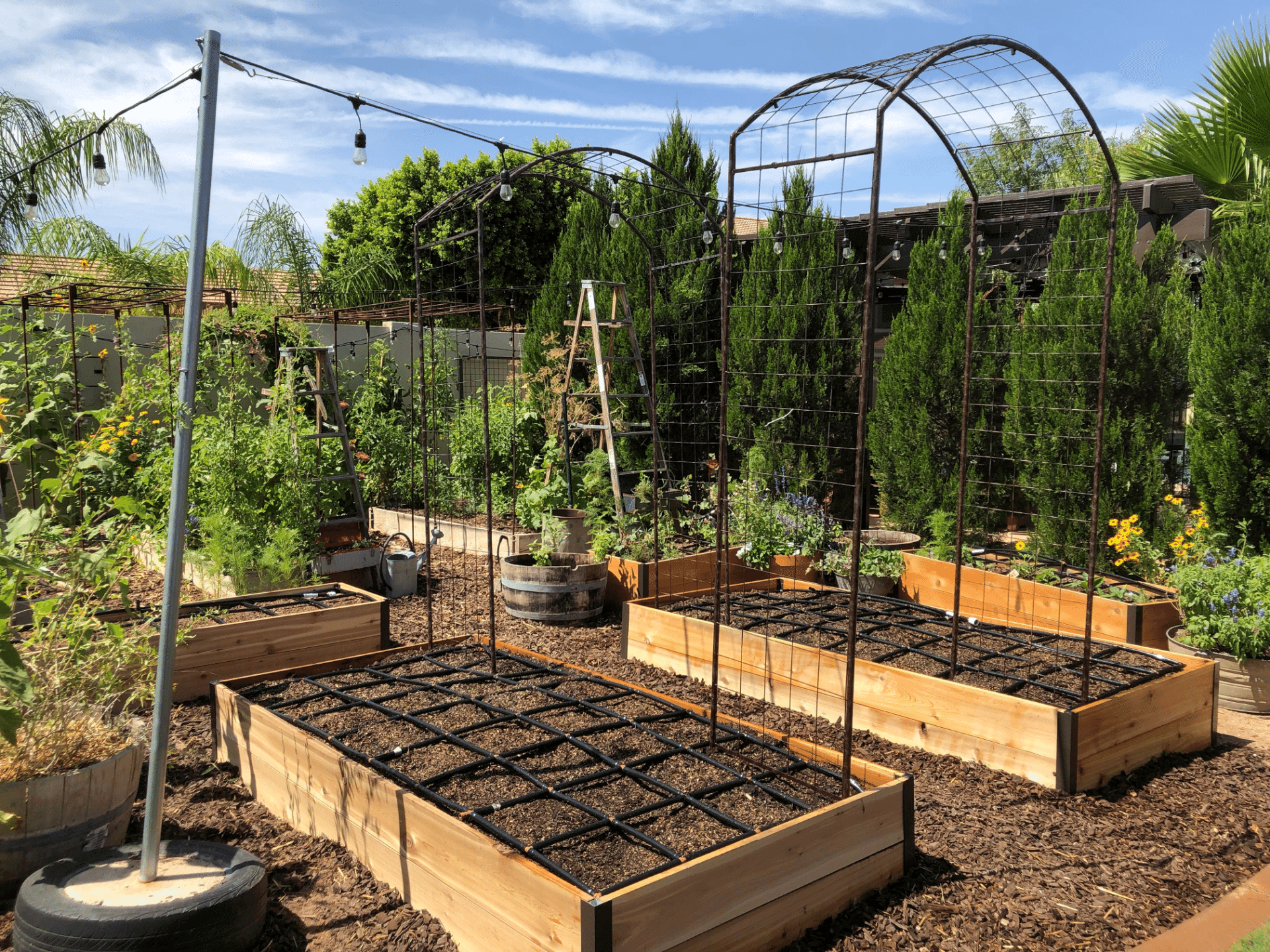 Plant Spacing in Square foot gardening