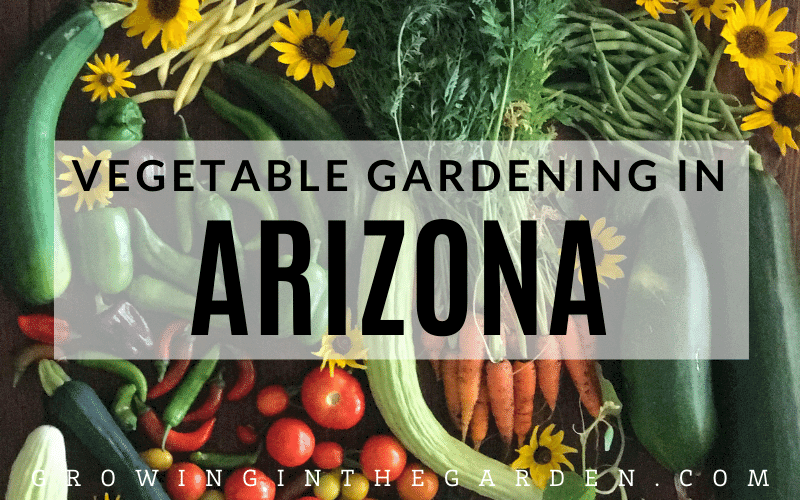 How to grow a vegetable garden in Arizona #arizonagardening #arizonagarden #desertgardening #hotweathergarden #howtogarden