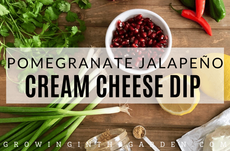 Pomegranate Jalapeño Cream Cheese Dip