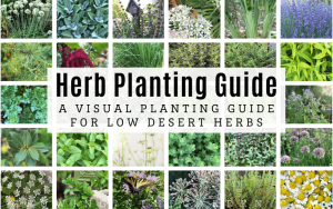 Arizona Herb Planting Guide_ A Visual Planting Guide for Low Desert Herbs