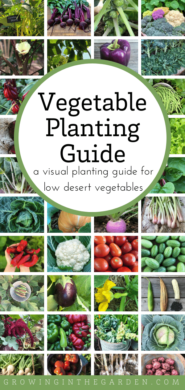 Arizona Vegetable Planting Guide: A Visual Guide for Low-Desert Vegetables