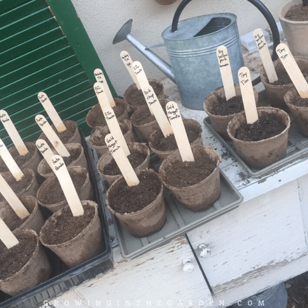 Best Way to Label Garden Plants