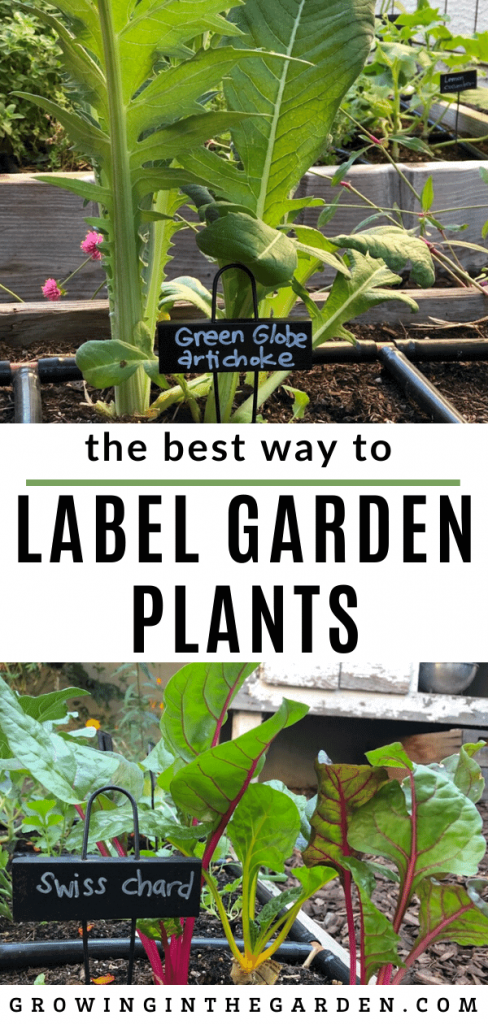 way to label garden plants that is easy to see, lasts all season (even in the Arizona summer sun), and can be reused season after season.