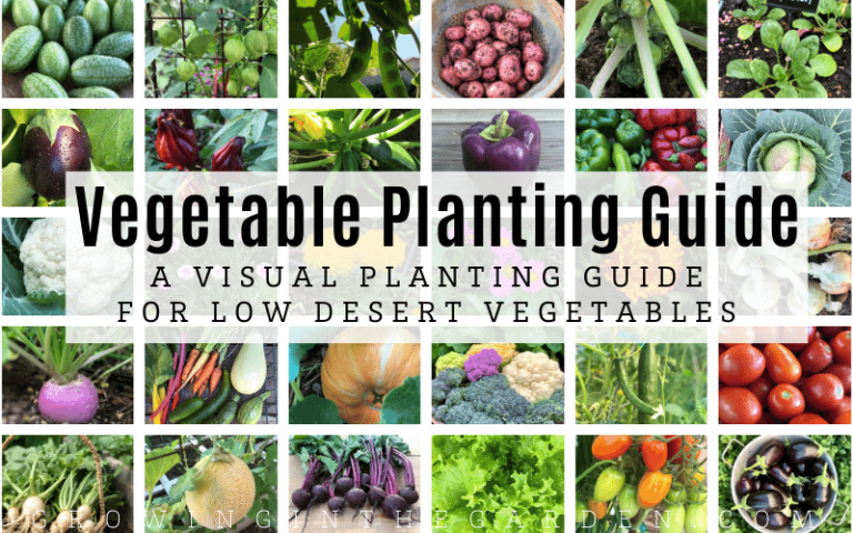 Vegetable Planting Guide: A Visual Planting Guide for Low Desert Vegetables