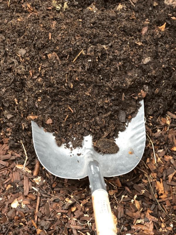 Spring Gardening in Arizona