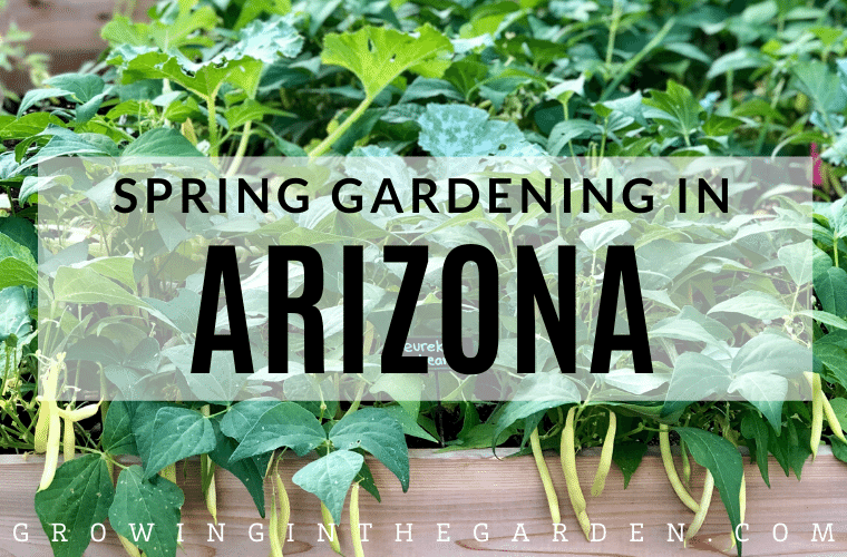 Spring Gardening in Arizona