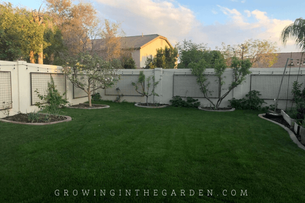 How to Kill Bermuda Grass Without Chemicals Before Planting a Garden