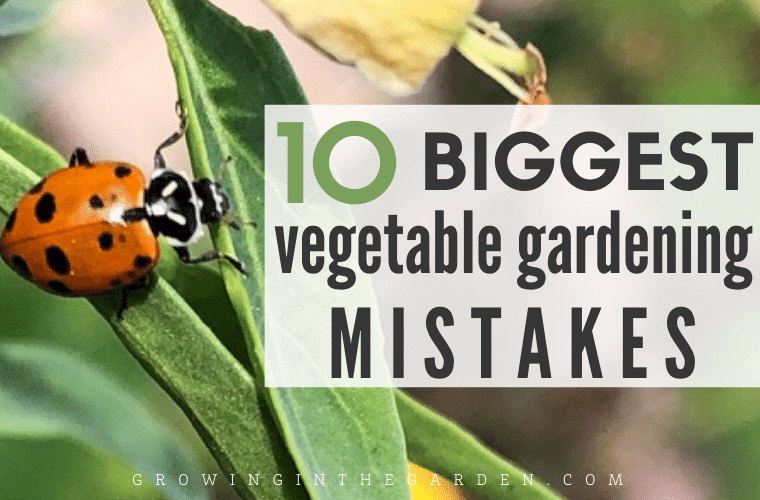 10 Biggest Vegetable Gardening Mistakes