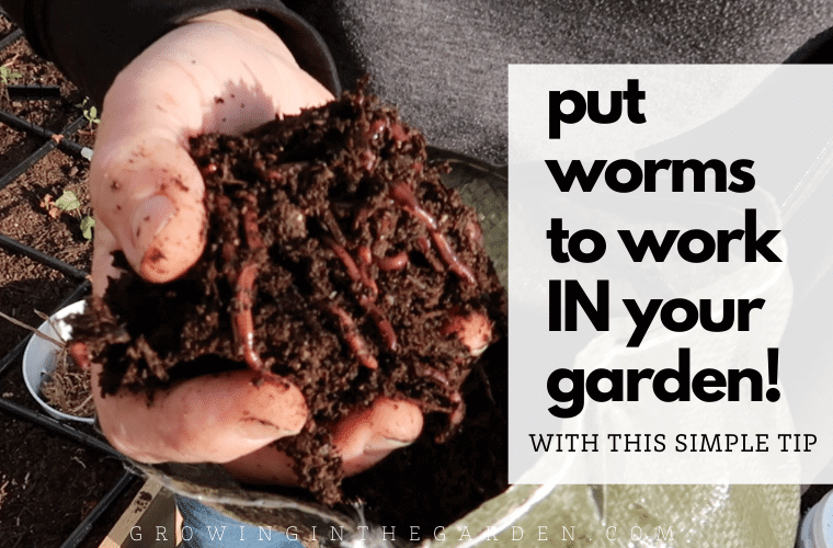 Vermicomposting Made Easy: In-Bed Worm Composting
