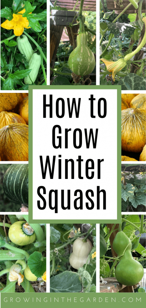 How to Grow Winter Squash: 9 Tips for Growing Winter Squash
