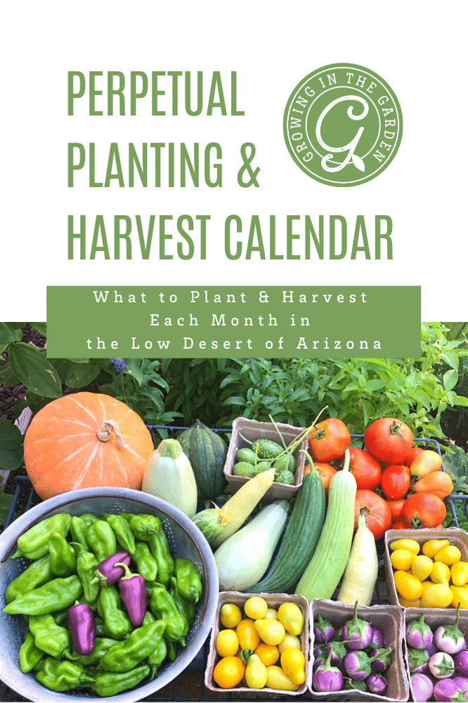 Perpetual Planting & Harvest Calendar for the Low Desert of Arizona