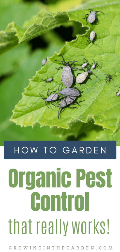 Organic Pest Control That Really Works