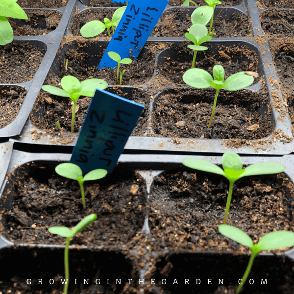 Seed-Starting Guide for Low-Desert Vegetables: When to Start Your Seeds Indoors