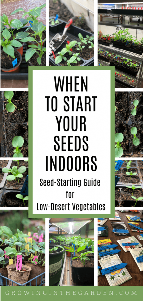 When to Start Seeds Indoors: A Seed-Starting Guide for Low-Desert Vegetables