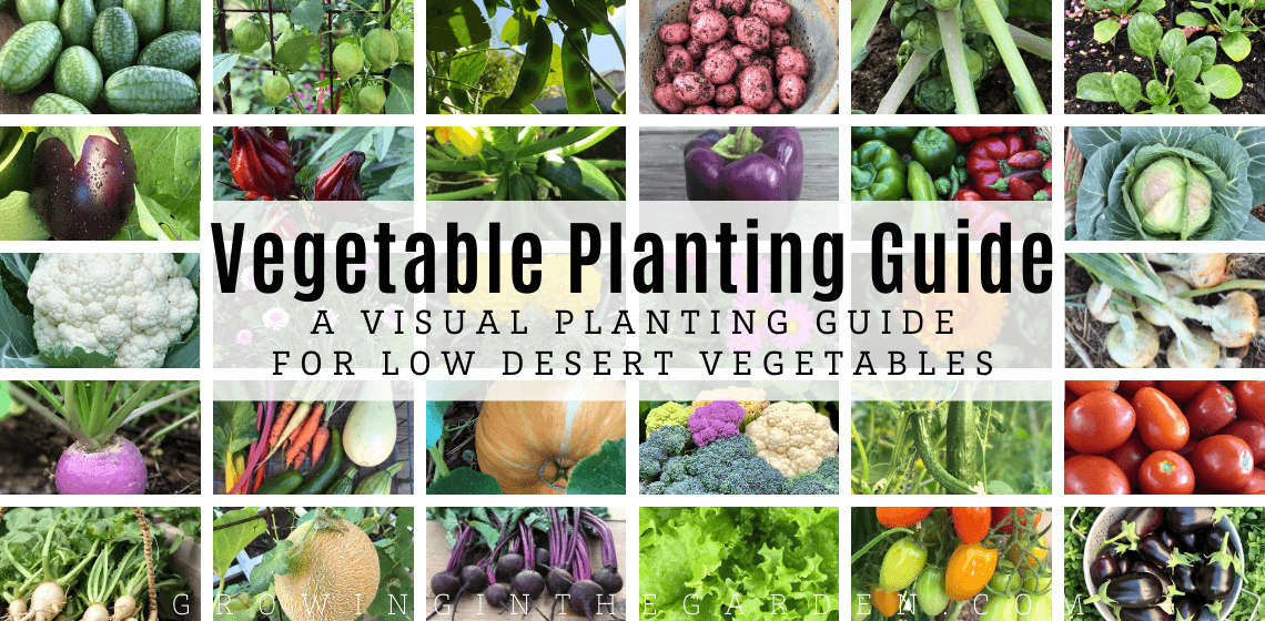 Slider Vegetable Planting Guide_ A Visual Planting Guide for Low Desert Vegetables (1) (1)