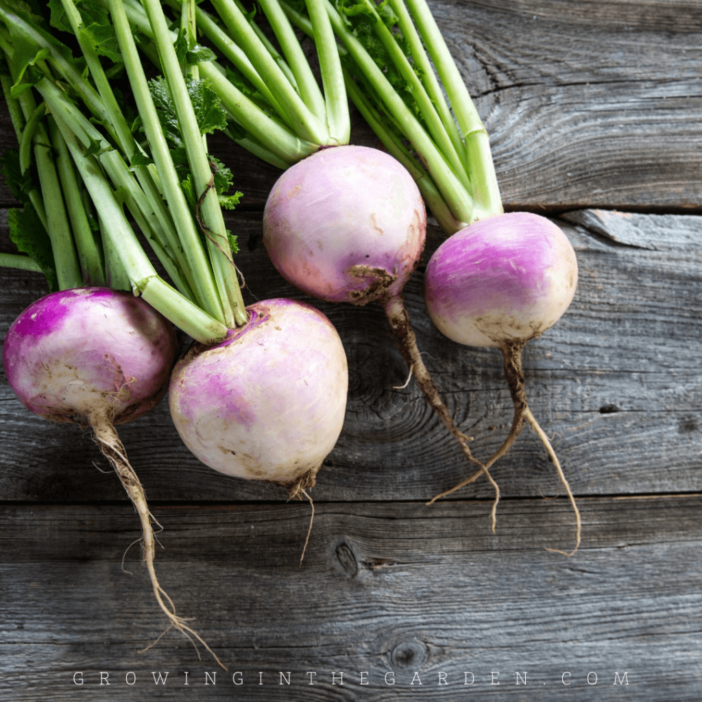 How to Grow Turnips - 5 Tips for Growing Turnips