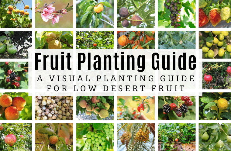 Arizona Fruit Planting Guide_ A Visual Planting Guide for Low Desert Fruit