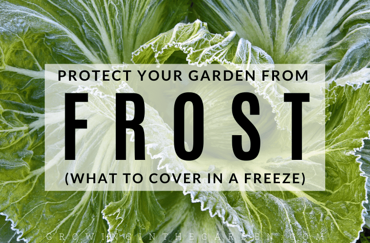 What to cover in a freeze