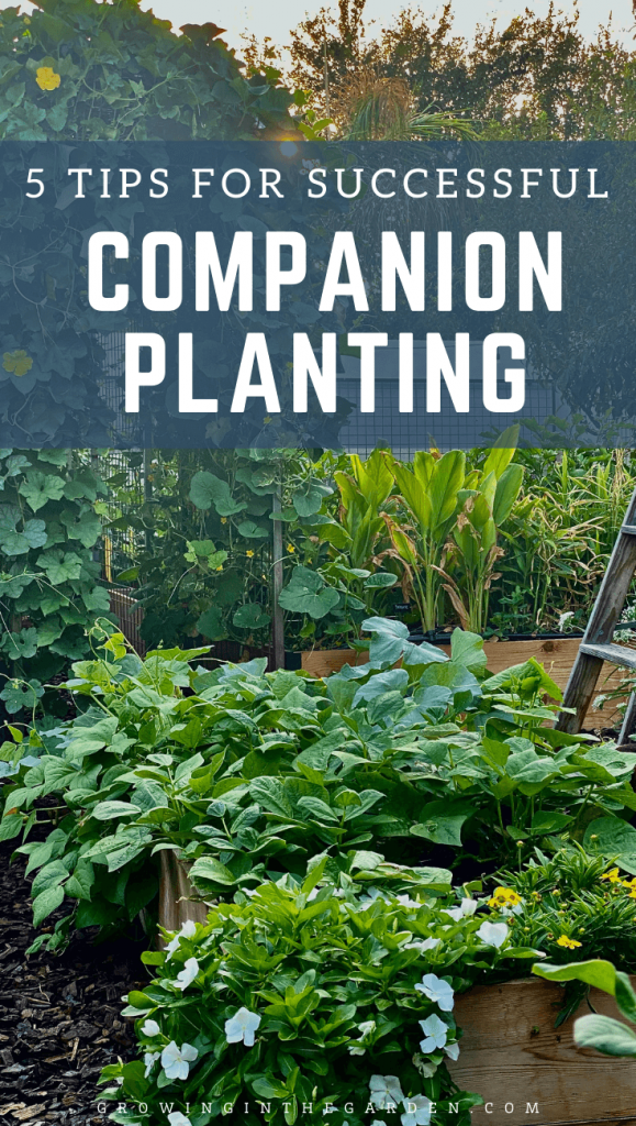 5 Tips for Successful Companion Planting