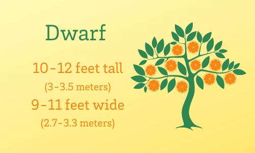 Dwarf citrus trees