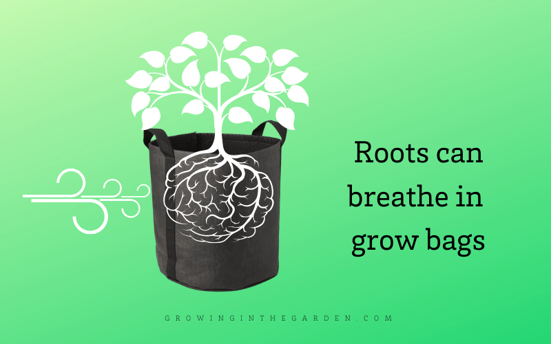 Why are grow bags healthy for plant's roots