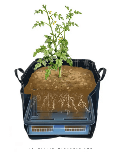 Gardening in Grow bags: 5 Tips for SUCCESS