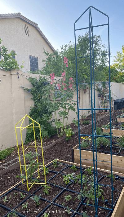 Gardeners Zenith Supports
