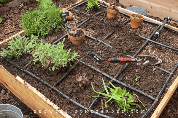 Planting in new beds
