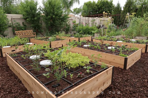 Deep Root Raised beds from Gardener's Supply