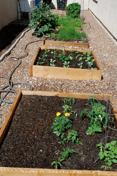 Garden Makeover: Before, During & After